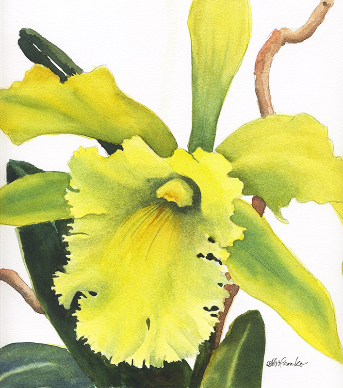 "Green Orchid (Watercolor,  14"" x 14"" matted) $249"