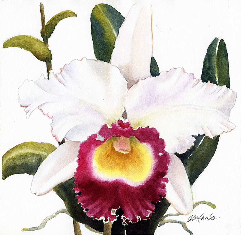 "Purple Lip Orchid (Watercolor, 14"" x 14"" matted) $249"