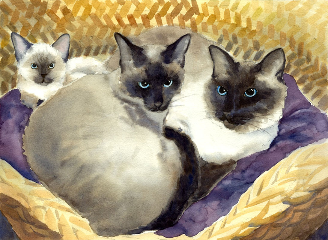 "Three Siamese, matted 16"" x 20"", $79"