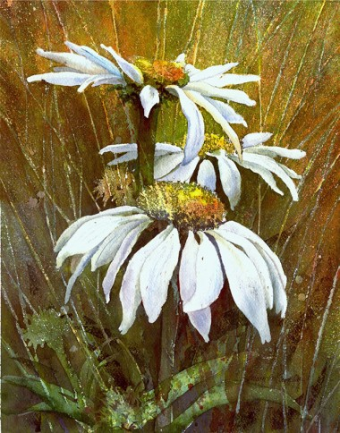 Watercolor of white coneflowers