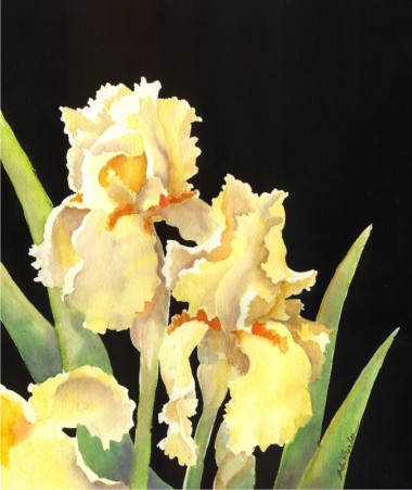 Watercolor of yellow irises