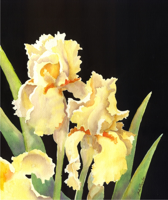 "Yellow Irises, matted 14"" x 16"", $59"